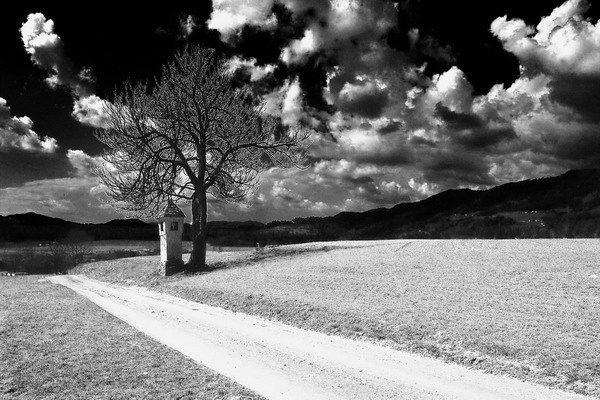 Baum und Land
