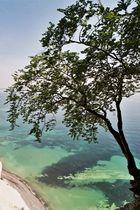 Baum und Meer