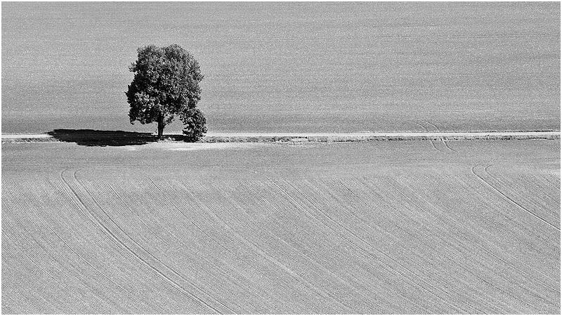 Baum und Schatten