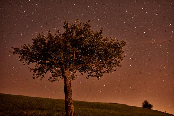 Baum und Sterne