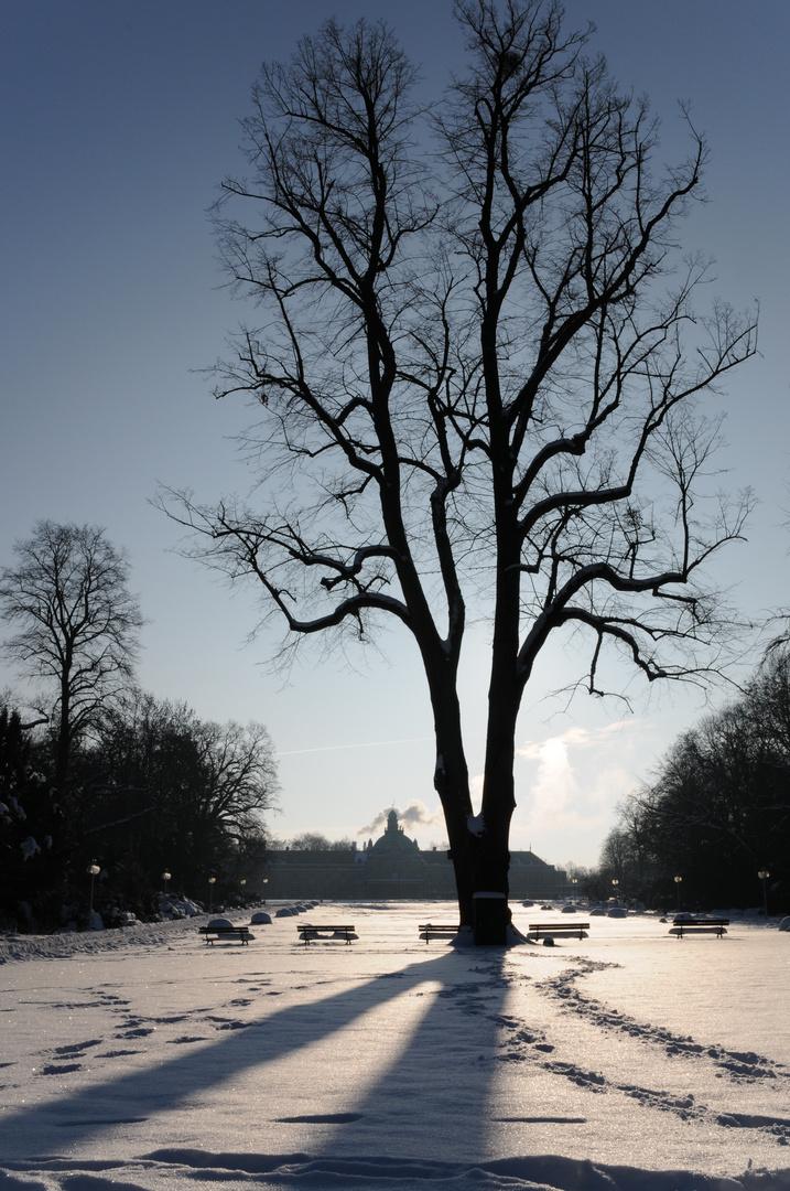 Baum und Wintersonne