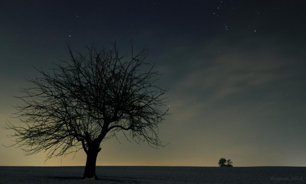 Baum unter den Sternen