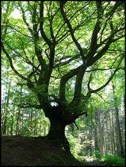 Baum - Version 4