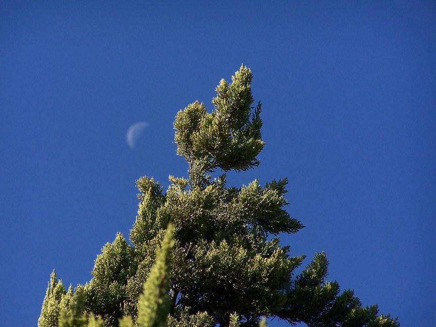 Baum von Träumen