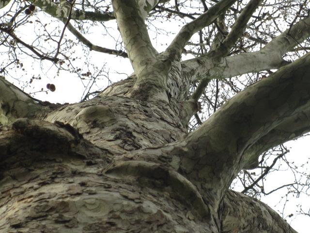 Baum von unten