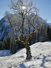Baum vor Berg B-900