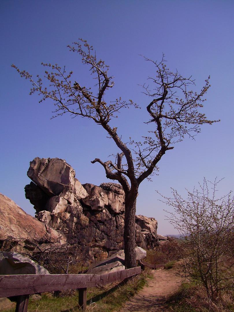 Baum vor der Teufelsmauer