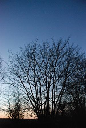 Baum vor eingehender Nacht