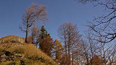 Baum vor Gipfel