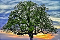 Baum vor glühendem Himmel