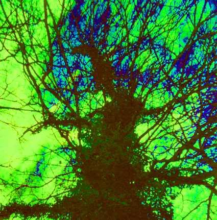 Baum vor grünem Himmel