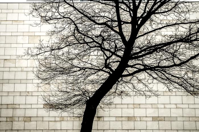 Baum vor Quadratwand