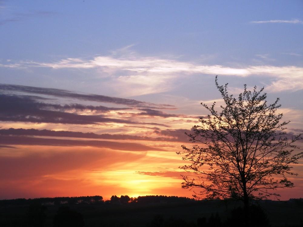 Baum vor Sonnenuntergang