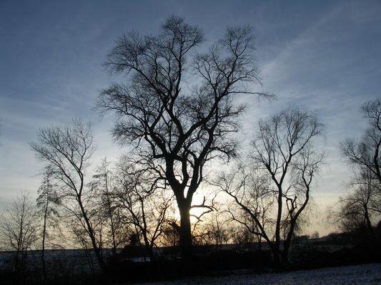 Baum vor untergehender Wintersonne