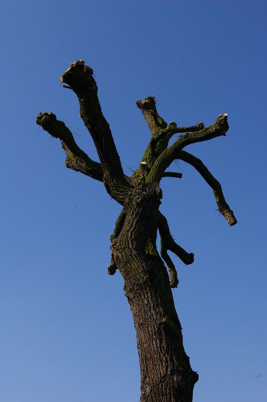 Baum vor wolkenlosem Himmel