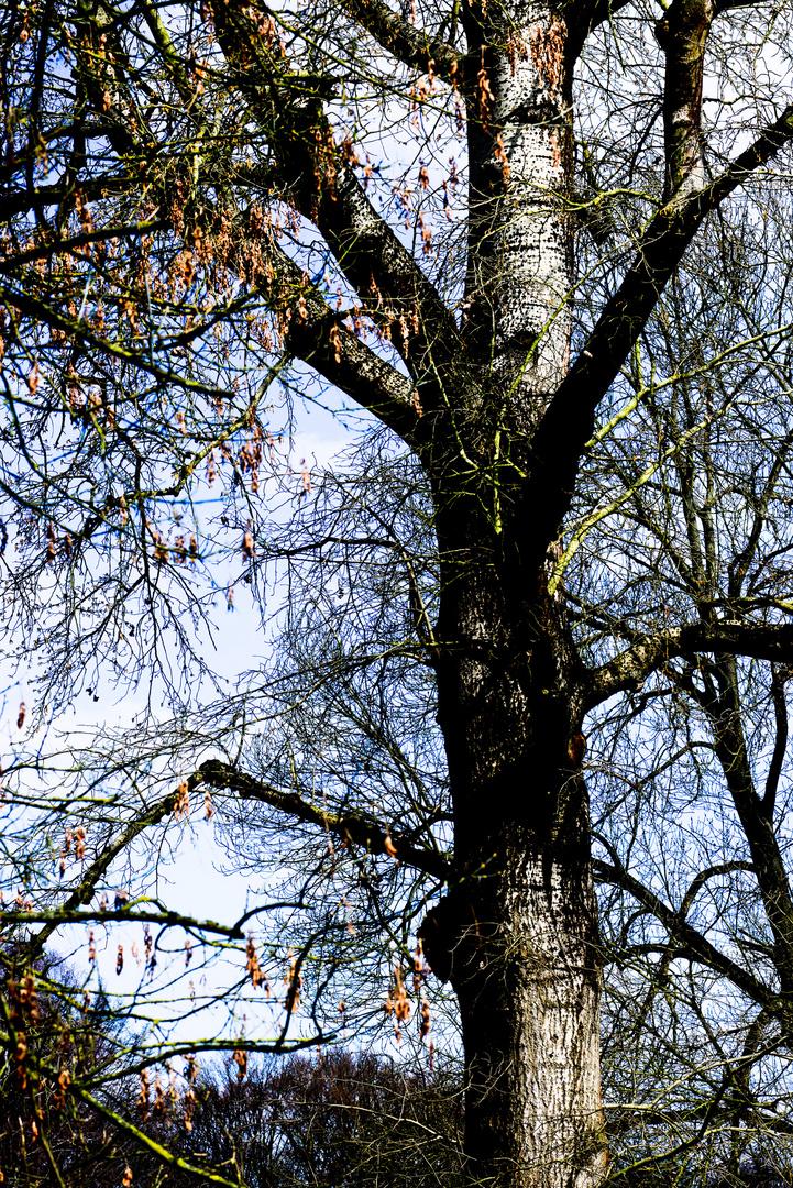 Baum - Waldpark - Mannheim