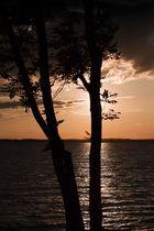 Baum - Wasser - Licht