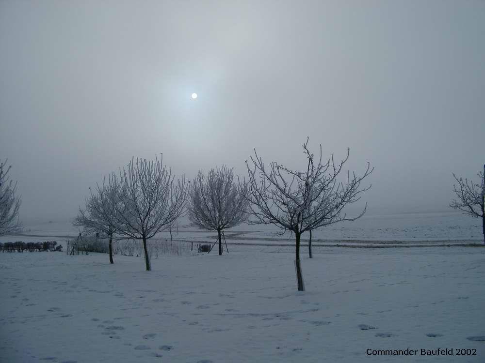 Baum-Wiese im Wandel der Jahreszeiten 1