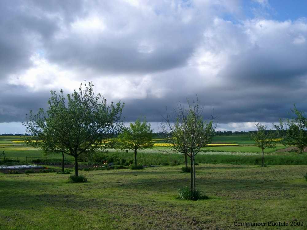Baum-Wiese im Wandel der Jahreszeiten 6