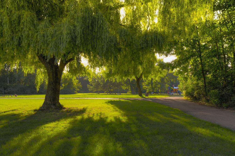 Baum, Wiese und Farben