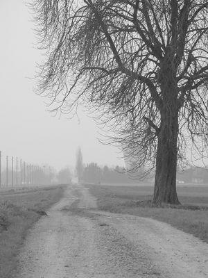Baum Winter