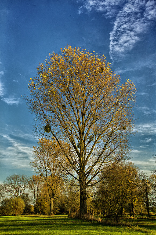 Baum + Wolke