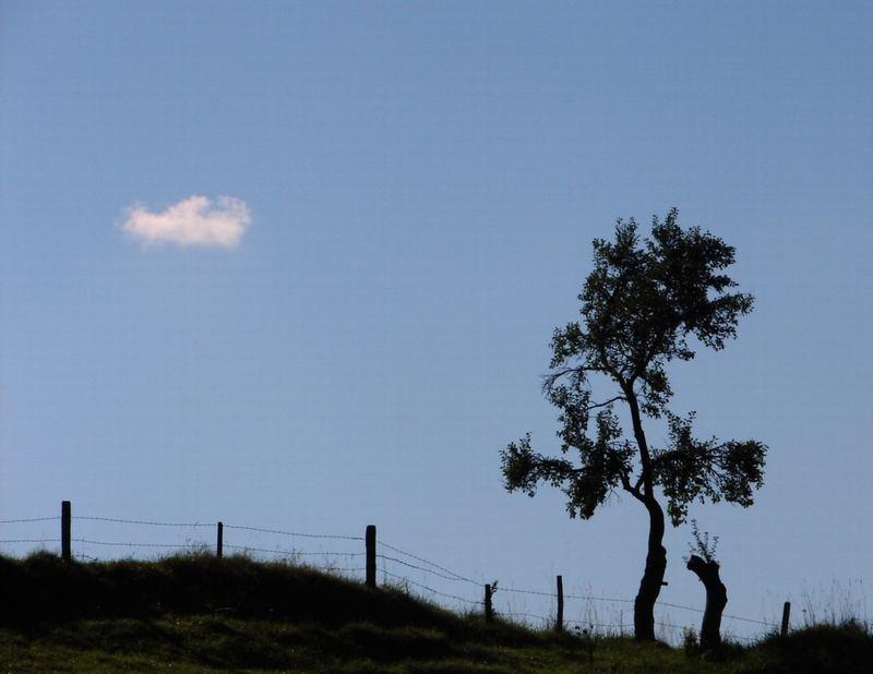 Baum & Wolke