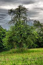 Baum_001