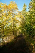Baumalee im Herbst