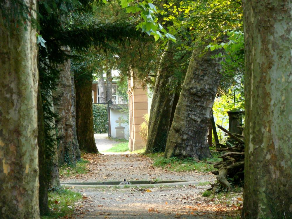 Baumallee auf dem Alten Friedhof in Freiburg