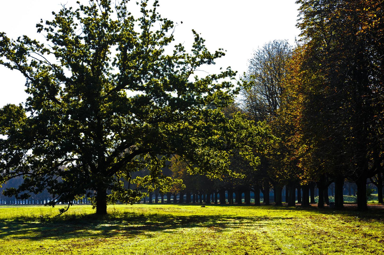 Baumallee im Herbst