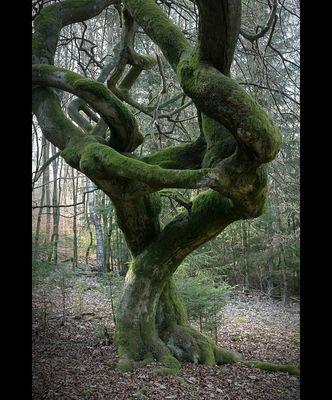 Baumansichten (6)