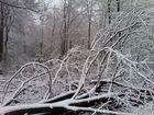 Baumberge, Münsterland, Winter am 10.03.2013