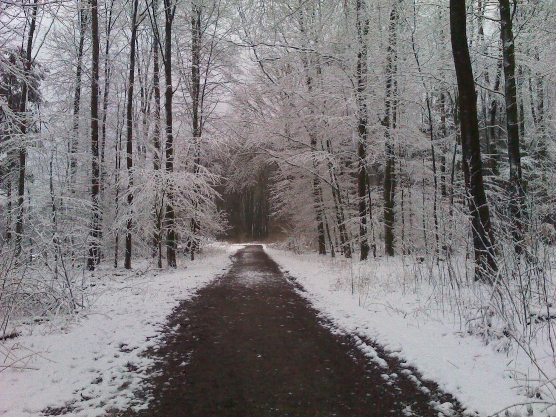 Baumberge, Münsterland, Winter im März 2013 - 1