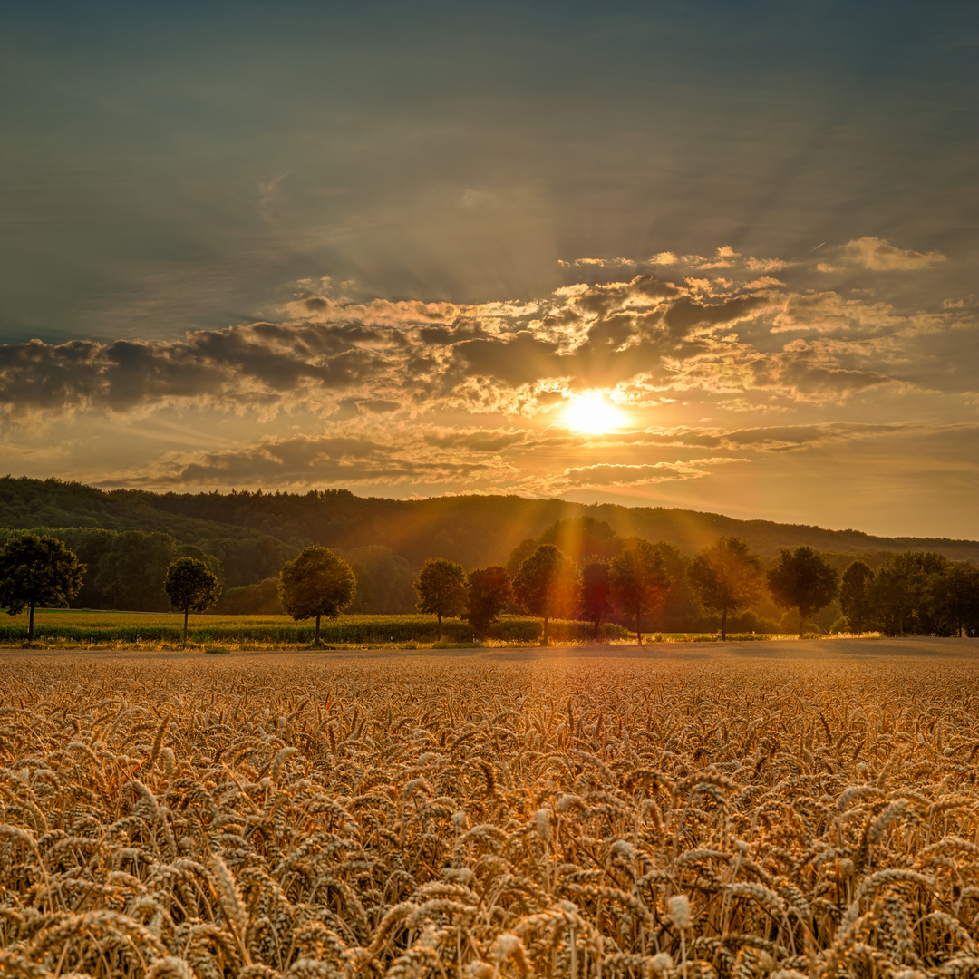 Baumberger Sonnenuntergang