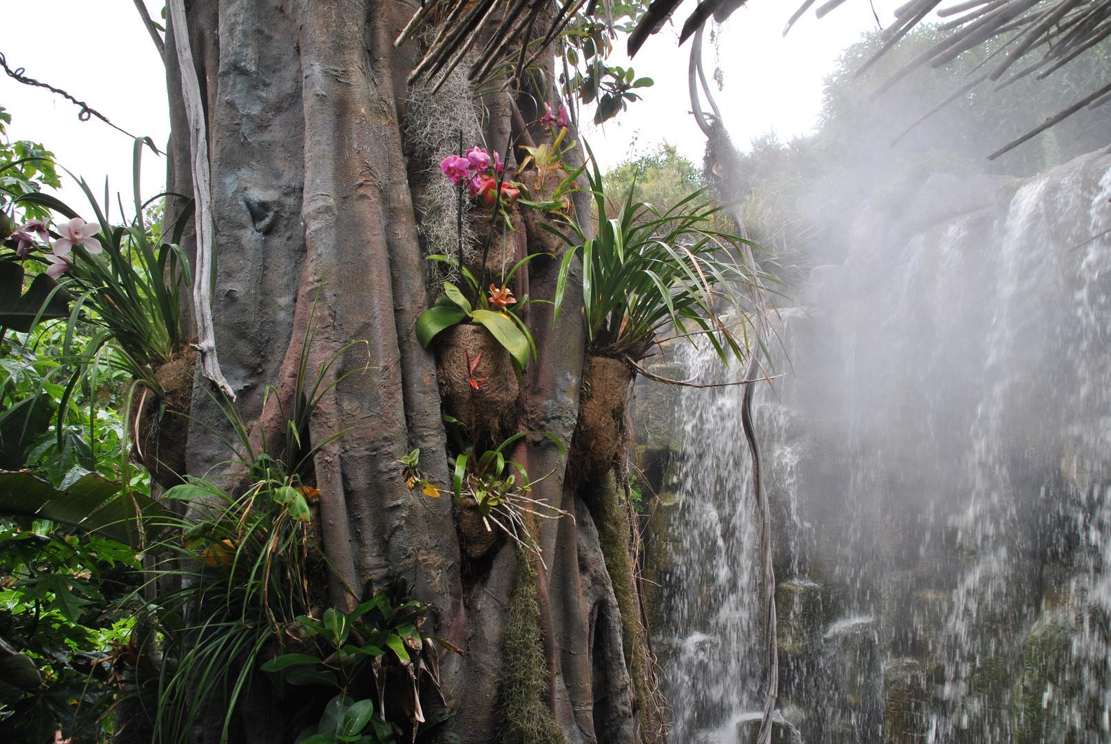 Baumbewuchs durch orchideen