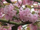 Baumblüte 2