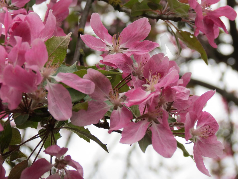 Baumblüte 3