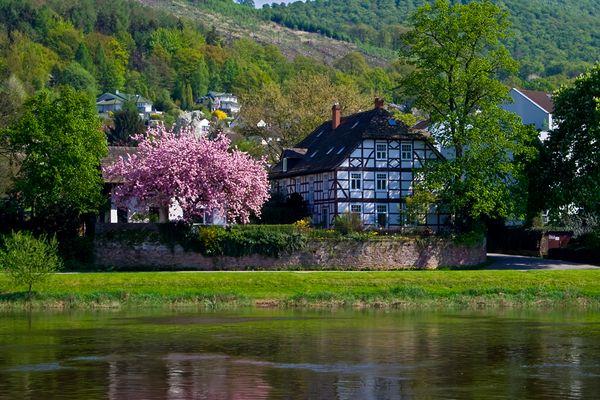 Baumblüte - Bodenwerder an der Weser