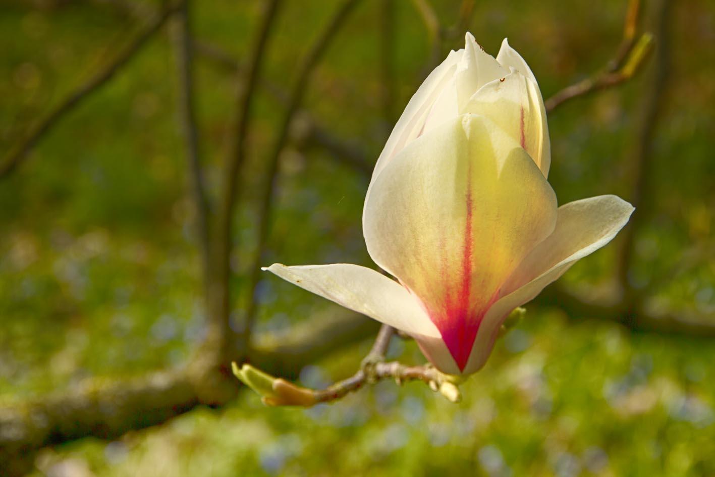 Baumblüte im Sonnenlicht