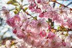 Baumblüte mitten in der Stadt