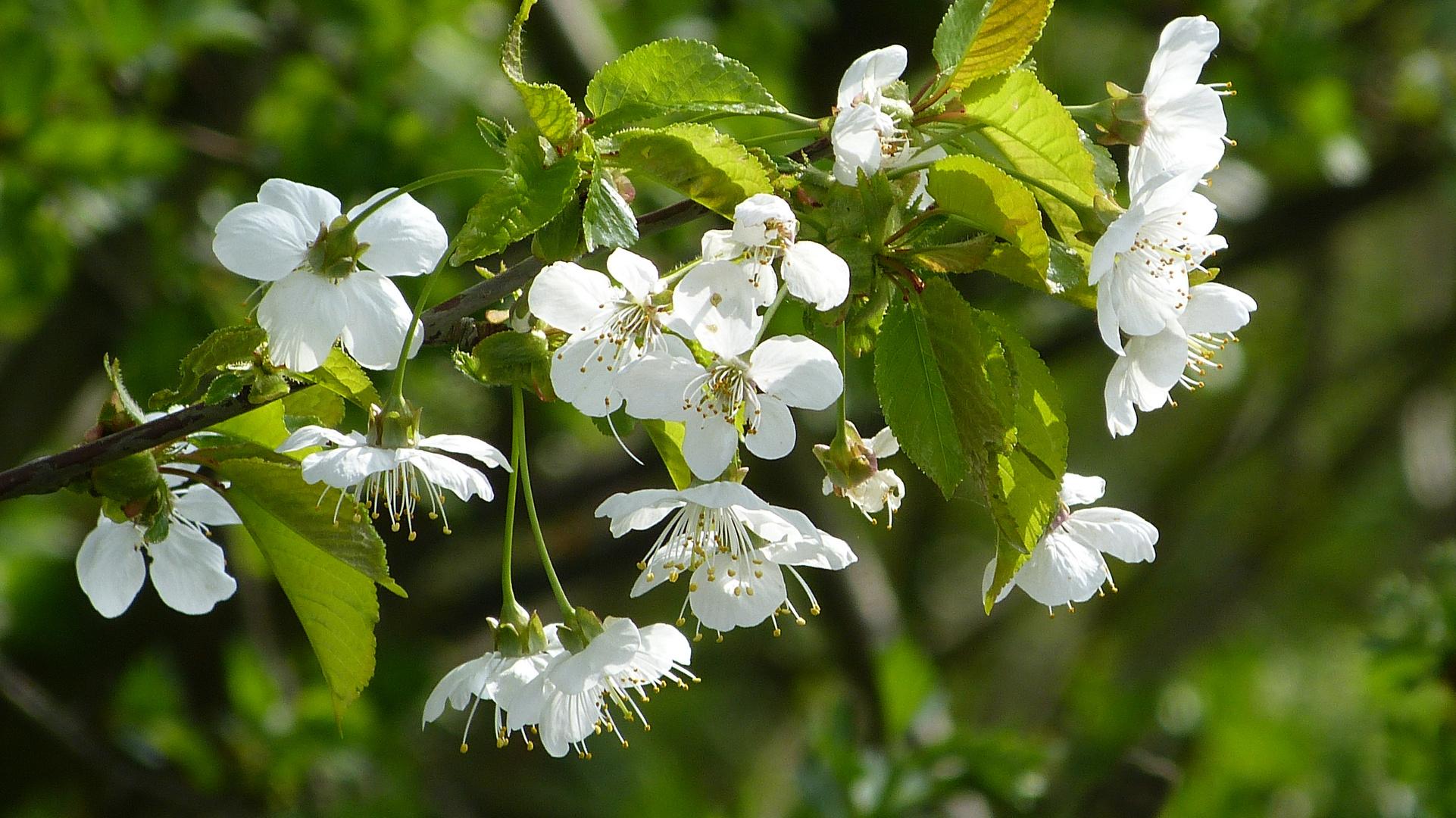 Baumblüten 4