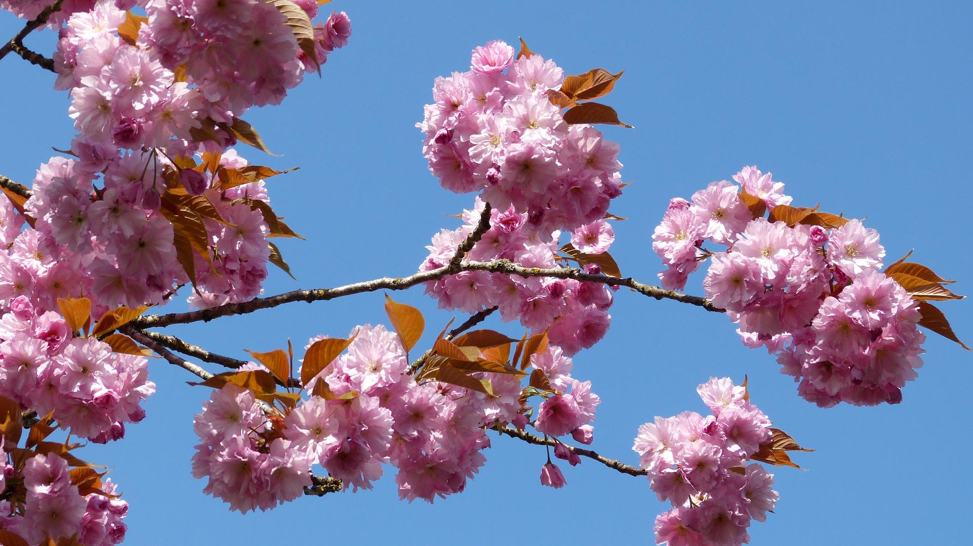 Baumblüten 9