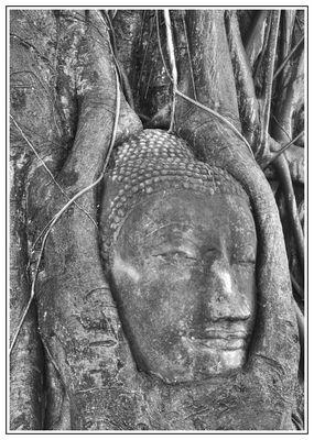 Baumbuddha SW