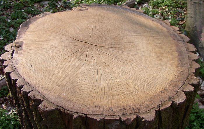 Baumdaten