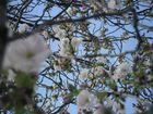 Baumen blüte 2