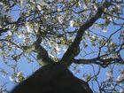 Baumen blüte 6
