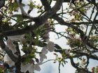 Baumen blüte 7