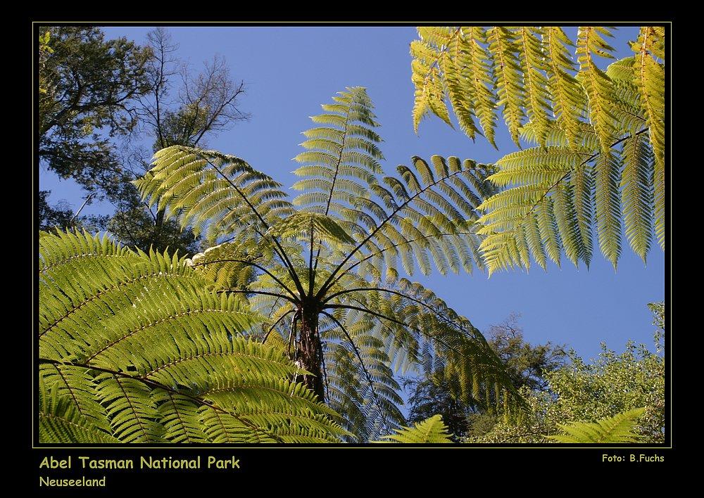 Baumfarne im Abel Tasman Nationalpark