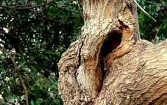 Baumgesichter - Komischer Vogel